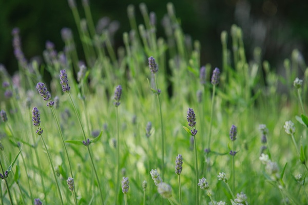 Understanding Herbs & Essential Oils (and the Super Bundle)