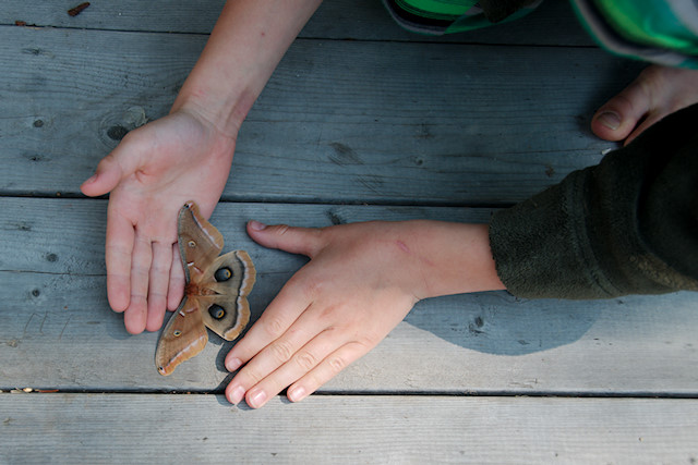 kids on deck with moth