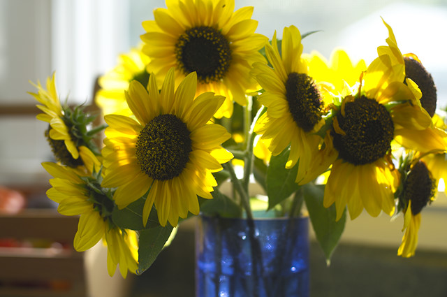 yellow sunflowers in blue vase